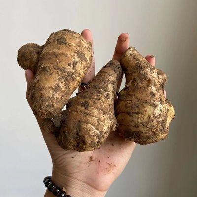 现挖新鲜山东农家自种老姜姜母两年姜2-5斤整箱批发【10月28日发完】