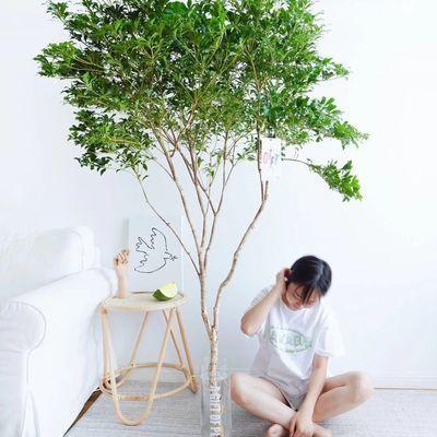 日本进口精品马醉木鲜切枝吊钟植物室内办公室花材室内居家小森林