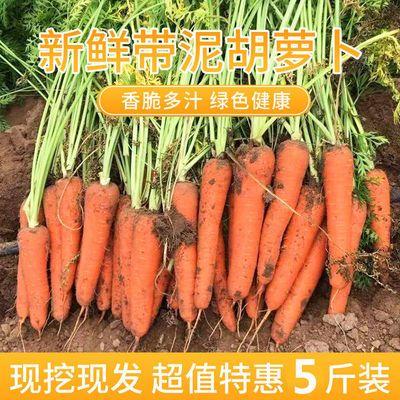 胡萝卜水果萝卜新鲜时令生吃水果型红萝卜蔬菜当季整箱脆甜现挖