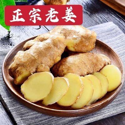 山东大姜黄姜生姜老姜特价月子姜批发老姜母生姜新鲜蔬菜2/3/5斤