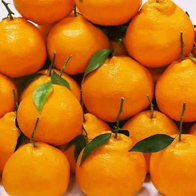 【蜜甜多汁】四川耙耙柑高山应季新鲜水果现摘现发非不知火丑橘子