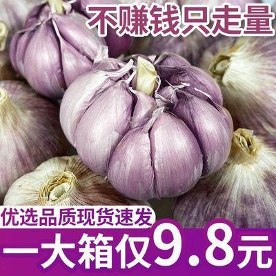 【优选】山东本地紫皮大蒜新鲜干蒜大蒜头种子红皮批发价5斤/10斤