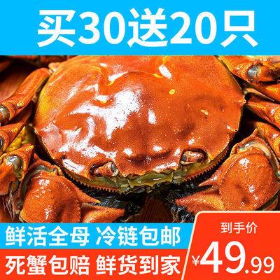 {特大蟹}大闸蟹鲜活现货全母特大公母螃蟹六月黄现货礼装4-2.5两