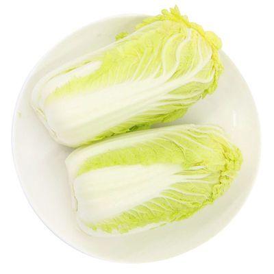 八步沙娃娃菜白菜新鲜蔬菜5斤包邮甘肃圆头白菜农家新鲜菜