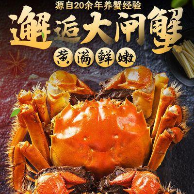 【全母全公大蟹】大闸蟹鲜活现货螃蟹湖北特大满黄母蟹1.4-4.0两
