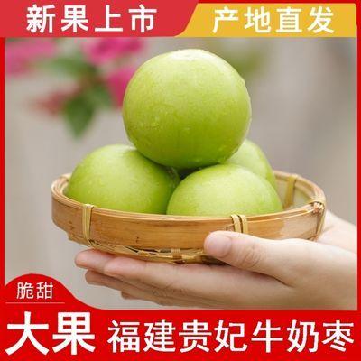 【牛奶大青枣】福建贵妃蜜枣新鲜脆甜贵妃枣大果整箱批发牛奶枣子