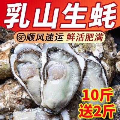 生蚝鲜活12斤新鲜海蛎子6斤特大海鲜乳山牡蛎贝壳水产批发一箱