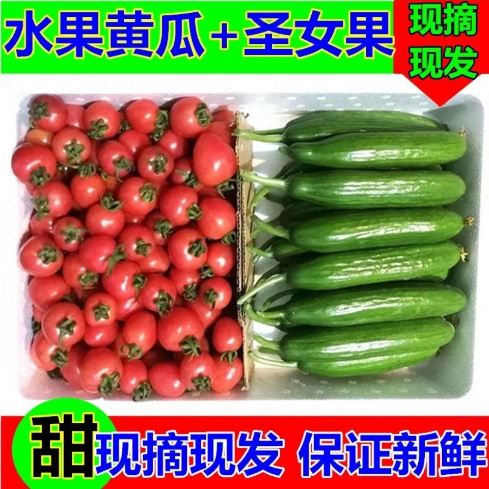 圣女果小黄瓜5斤 3斤小番茄新鲜蔬菜樱桃小西红柿水果黄瓜 小柿子