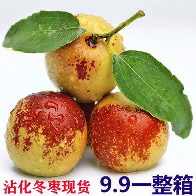 正宗山东沾化冬枣新鲜水果脆甜孕妇小孩当季现摘现发3斤5斤包邮