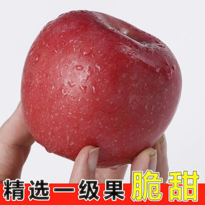现摘山西新鲜红富士苹果应季正宗冰糖心脆甜丑苹果水果3/5/10斤