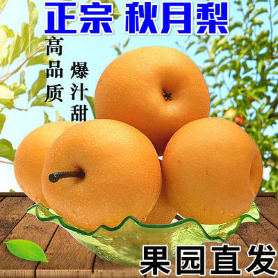 丰水梨黄花梨子新鲜冰糖丰水雪梨应季5斤水果当季整箱包邮