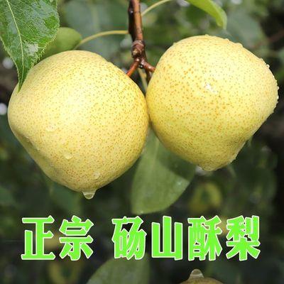 砀山酥梨净重5斤装 单果200g 梨子新鲜当季脆甜多汁水果多仓发货