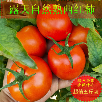 现摘露天沙瓤西红柿大番茄自然熟孕妇水果当季蔬菜3/5/10斤