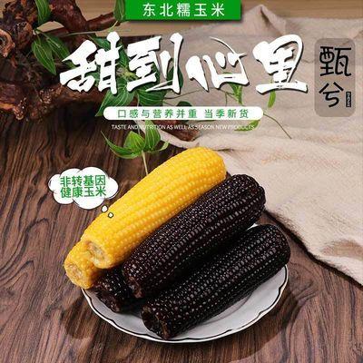 玉米东北黄粘糯玉米黑玉米棒真空非转早餐代餐零添加甜玉米黏苞米