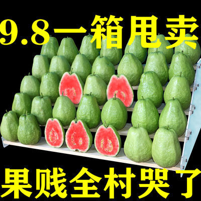 【香软甜】红心芭乐白心番石榴芭乐水果白心芭乐应季水果5斤/10斤