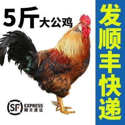 大公鸡山东农家纯粮散养新鲜宰杀大公鸡正宗笨公鸡鸡肉溜达走地鸡