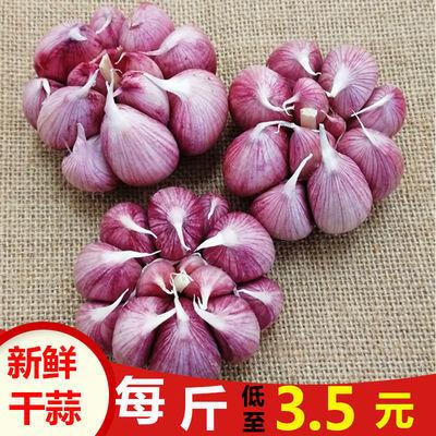 75873/红皮大蒜新鲜干蒜大蒜头种子 香蒜头干蒜紫皮大蒜批发价2/5/10斤