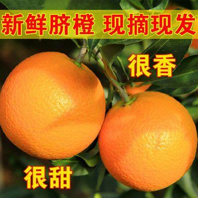【现货速发】高山脐橙有江西赣南脐橙纽荷尔脐橙和秭归脐橙