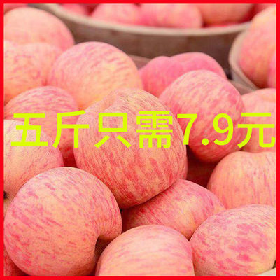 陕西冰糖心苹果当季水果新鲜红富士应季丑苹果脆甜5/10斤包邮整箱