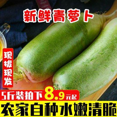 现摘现发5斤水果萝卜新鲜当季青萝卜10斤生吃甜脆生农家自种批发