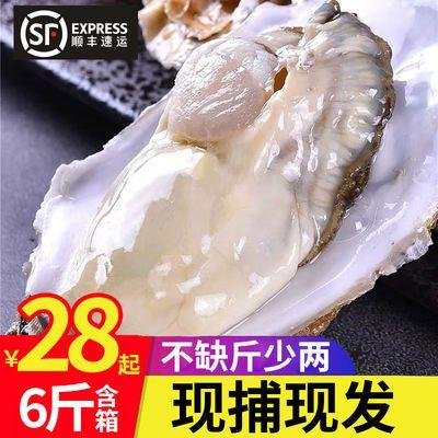【不肥包赔】乳山生蚝鲜活6斤新鲜大牡蛎海蛎子贝类海鲜水产整箱