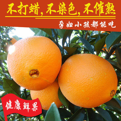 四川金堂脐橙新鲜果子橙子时令水果当季水果皮薄汁多无籽超甜橙子
