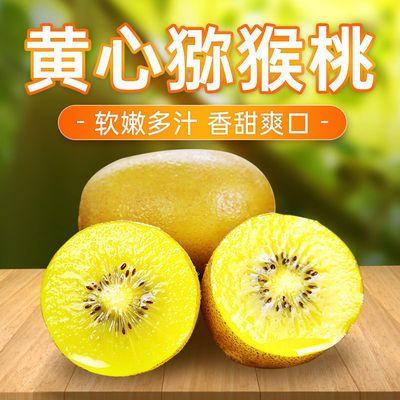 四川黄心猕猴桃奇异果当季新鲜孕妇水果现摘黄金黄色心蒲江猕猴桃