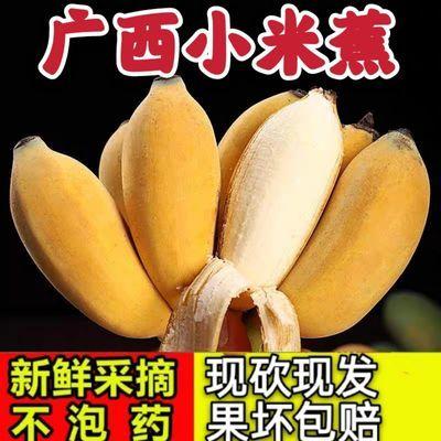 【泡沫箱】广西小米蕉当季新鲜水果苹果蕉香蕉批发皇帝芭蕉