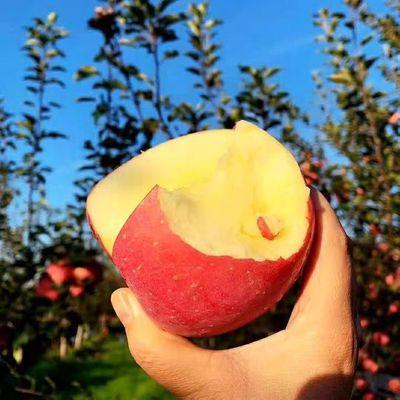 新鲜苹果红富士苹果脆甜多汁现摘现发应季水果整箱包邮非丑苹果