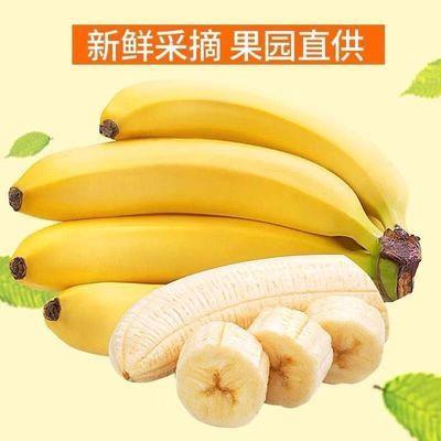 云南香蕉自然熟现砍当季新鲜水果果园直销批发包邮