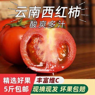 露天西红柿沙瓤生吃新鲜现摘大番茄自然熟蔬菜孕妇水果小西红柿10