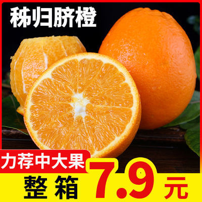 秭归脐橙湖北宜昌 橙子新鲜水果 当季甜橙湖北橙子新鲜薄皮现货
