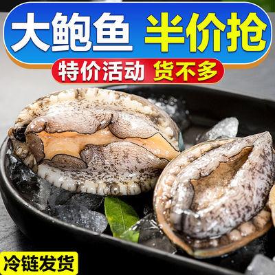 鲜冻鲍鱼鲜活海鲜海产超大特大鲍鱼佛跳墙材料新鲜冷冻海捕野生