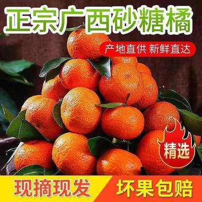 广西正宗沙糖桔蜜橘子砂糖橘新鲜水果柑橘皮薄金桔子纯甜沃柑批发