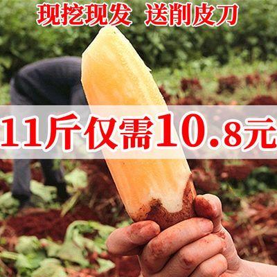 【11斤特价】云南雪莲果菊署万根苕新鲜应季水果脆甜多汁11斤【8月1日发完】