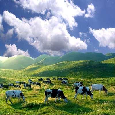 湖南城步特产 南山牧场酸奶原味鲜奶奶泡 牛初乳宝宝爱吃 包邮