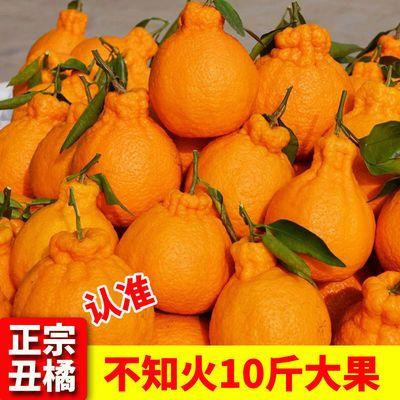 【假一罚十】正宗四川丑橘不知火丑八怪橘子丑桔当季新鲜水果包邮
