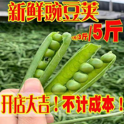【低价活动中】新鲜豌豆荚青豆毛豆新鲜蔬菜自种带壳大青豆荷兰甜