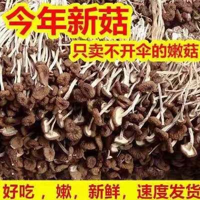 正品新货茶树菇干货批发新鲜批发广东煲汤料食材250g/500g/1000g