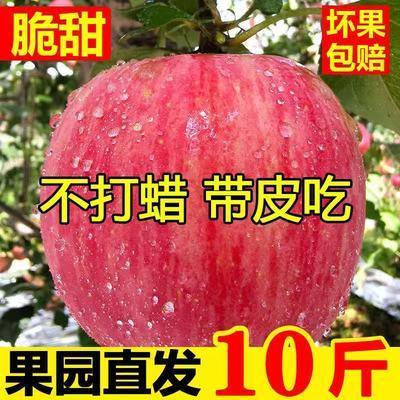 陕西红富士苹果脆甜多汁自种新鲜纯天然水果整箱苹果批发5斤/10斤