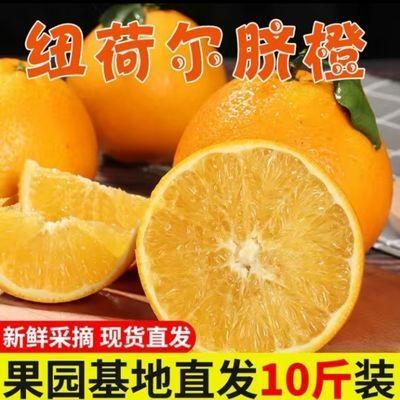 【10斤批发价】正宗湖南溆浦大江口纽荷尔脐橙   大果   75以上