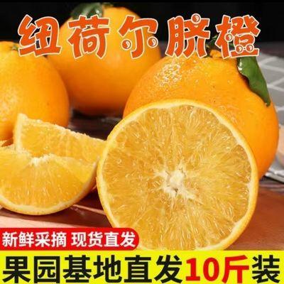 【10斤批发价】正宗湖南溆浦大江口纽荷尔脐橙鲜果