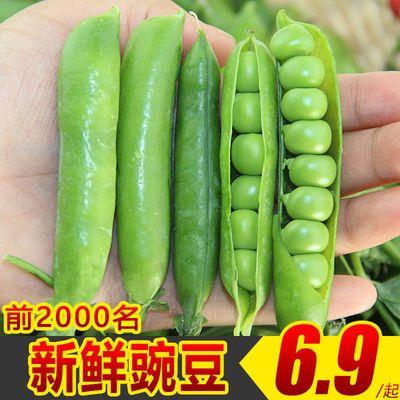 豌豆荚5斤净重云南带壳青豆蚕荷兰甜豆角毛豆四季豆新鲜1/3斤蔬菜
