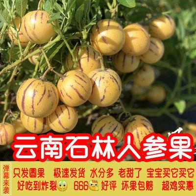 云南石林人参果圆果黄果5/10/3斤当季精选品质新鲜水果非长人生果