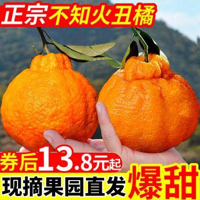 四川丑橘不知火丑八怪耙耙柑橘子丑柑新鲜水果批发应季新鲜丑桔