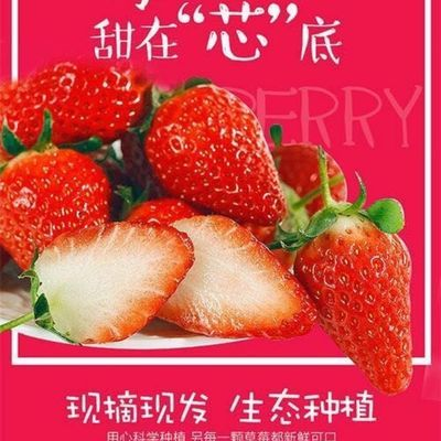 【空运包邮】牛奶草莓新鲜水果当季奶油草莓应季甜宝四季草莓现摘
