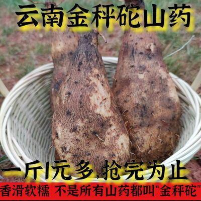 云南秤砣山葯扁山葯浓香软糯火锅节绝配菜品糯山葯林芝山葯包邮
