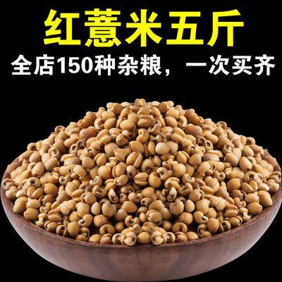 糙薏米新薏米小粒薏仁米糙薏米贵州特产薏仁糙薏仁五谷杂粮米批发