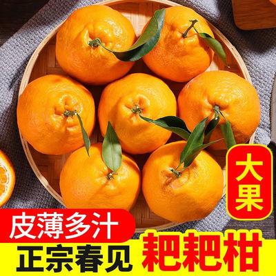 四川春见耙耙柑水果整箱粑粑柑水果现摘脆甜丑柑橘非不知火丑橘子