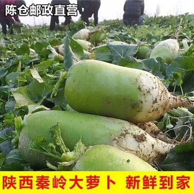 现挖现发丨陕西秦岭水果青萝卜农家白萝卜绿色蔬菜非水果胡萝卜